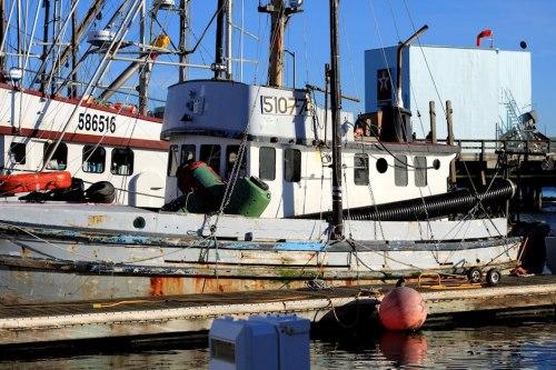 Boats Of Half Moon Bay 4