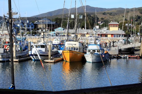 Boats Of Half Moon Bay 7