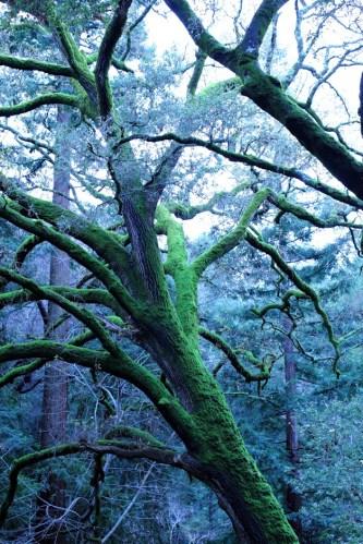 Big Mossy Tree