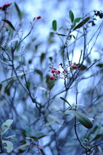 Mixed Berries 1