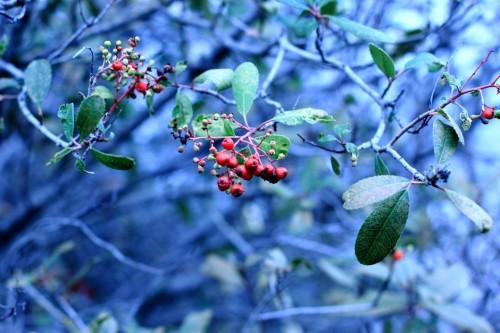 Mixed Berries 3