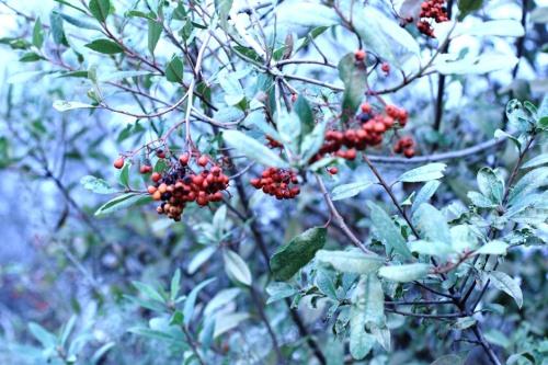 Mixed Berries 5