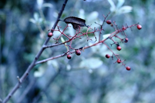 Mixed Berries 6