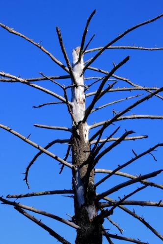 Trees Dead Jim
