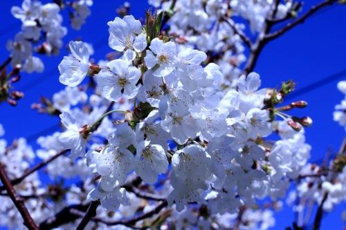 Something White For Spring