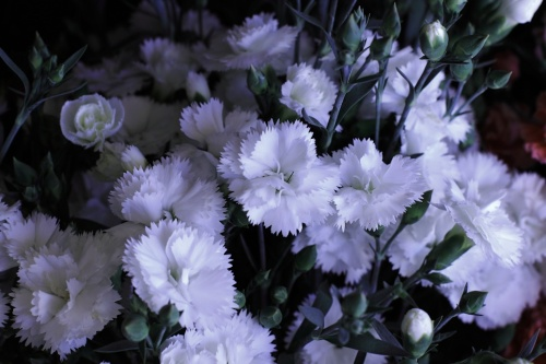 Plain White Flowers