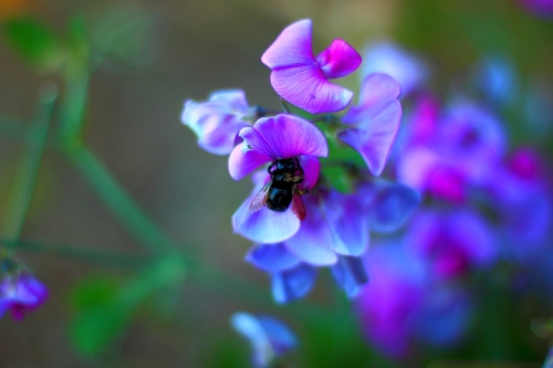 Colorful Black Bee