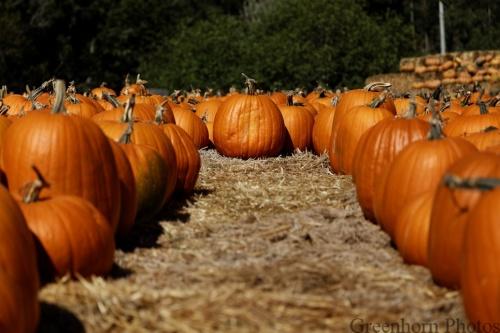 Pumpkin Standing Out