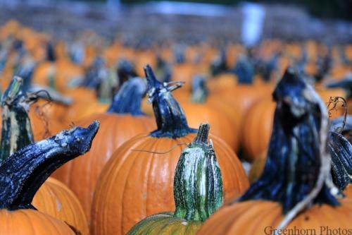 The Great Pumpkin Gang