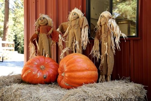 Scarecrow Hoedown
