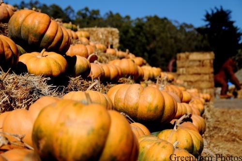The Pumpkin Gallery
