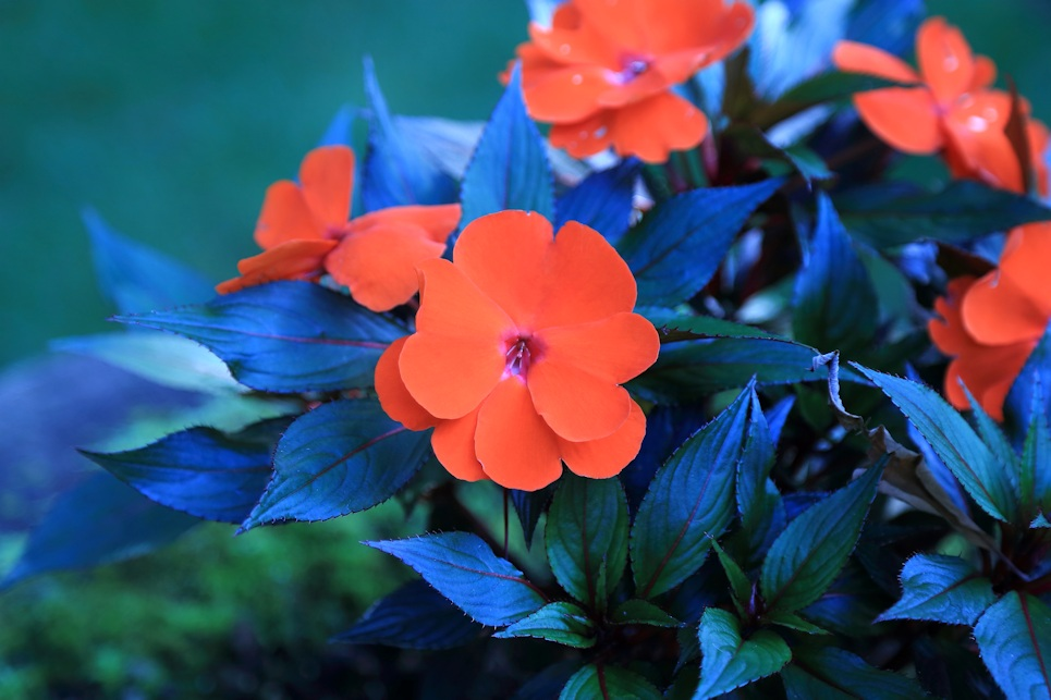 Springtime Orange Flowers | Eye For Life