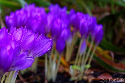 Royal Botanic Garden Edinburgh.